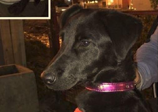 Dueña abandonó a una perra en plena Kuanip y ahora le buscan un hogar