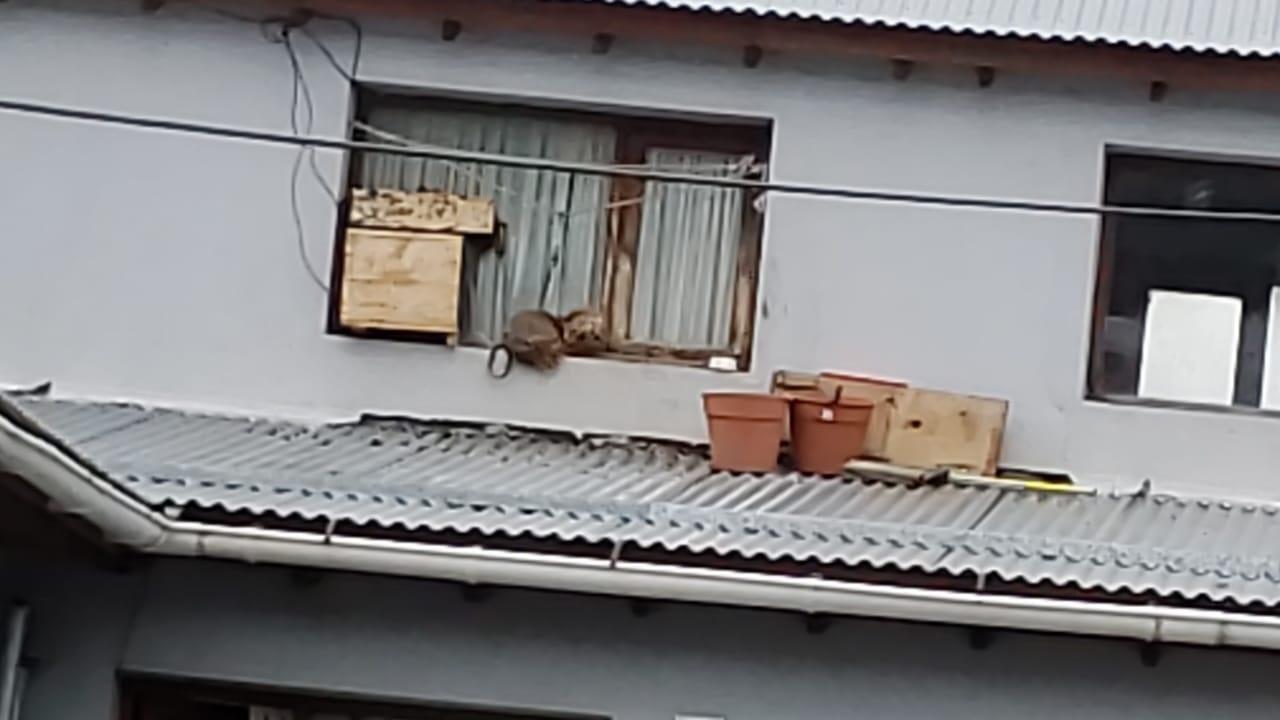 Denunciaron a un hombre que tenía a su perro atado en el alero de una ventana