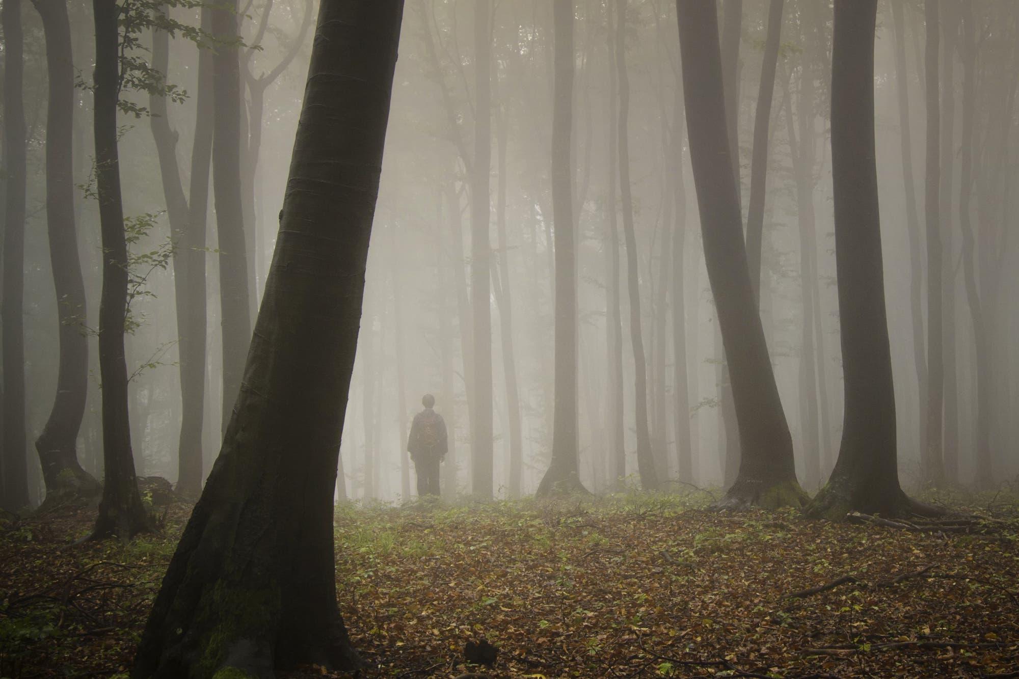 """Perderse en el bosque: cómo """"aprender a bailar"""" con los sistemas complejos"""