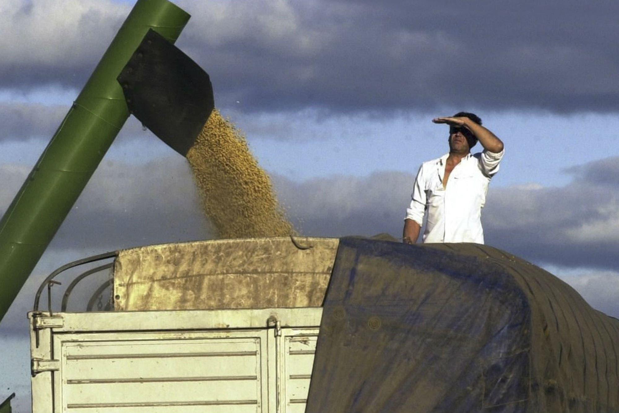 En 120 años. Un estudio de la Rural revela que el campo creció más cuando no tuvo trabas