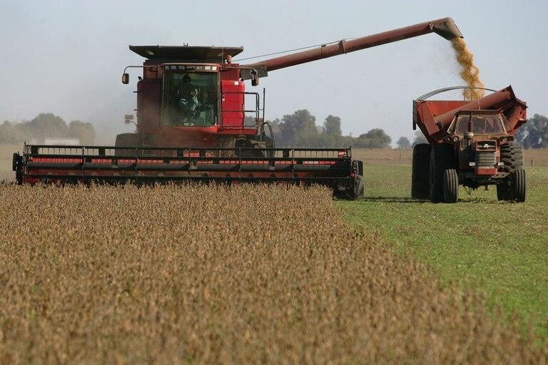 mercado-de-granos:-gran-oferta,-mayor-demanda