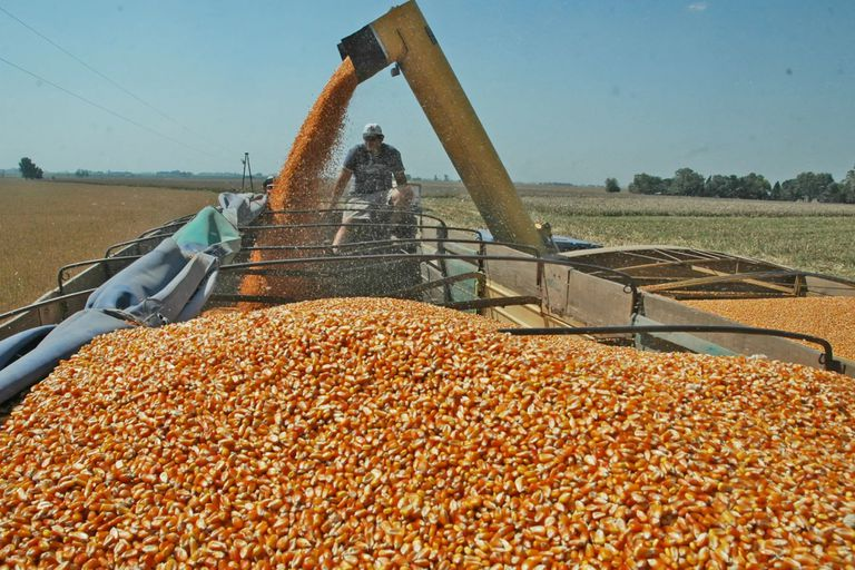 opinion:-representacion,-intereses-y-asimetrias-en-las-cadenas-de-produccion-agricola