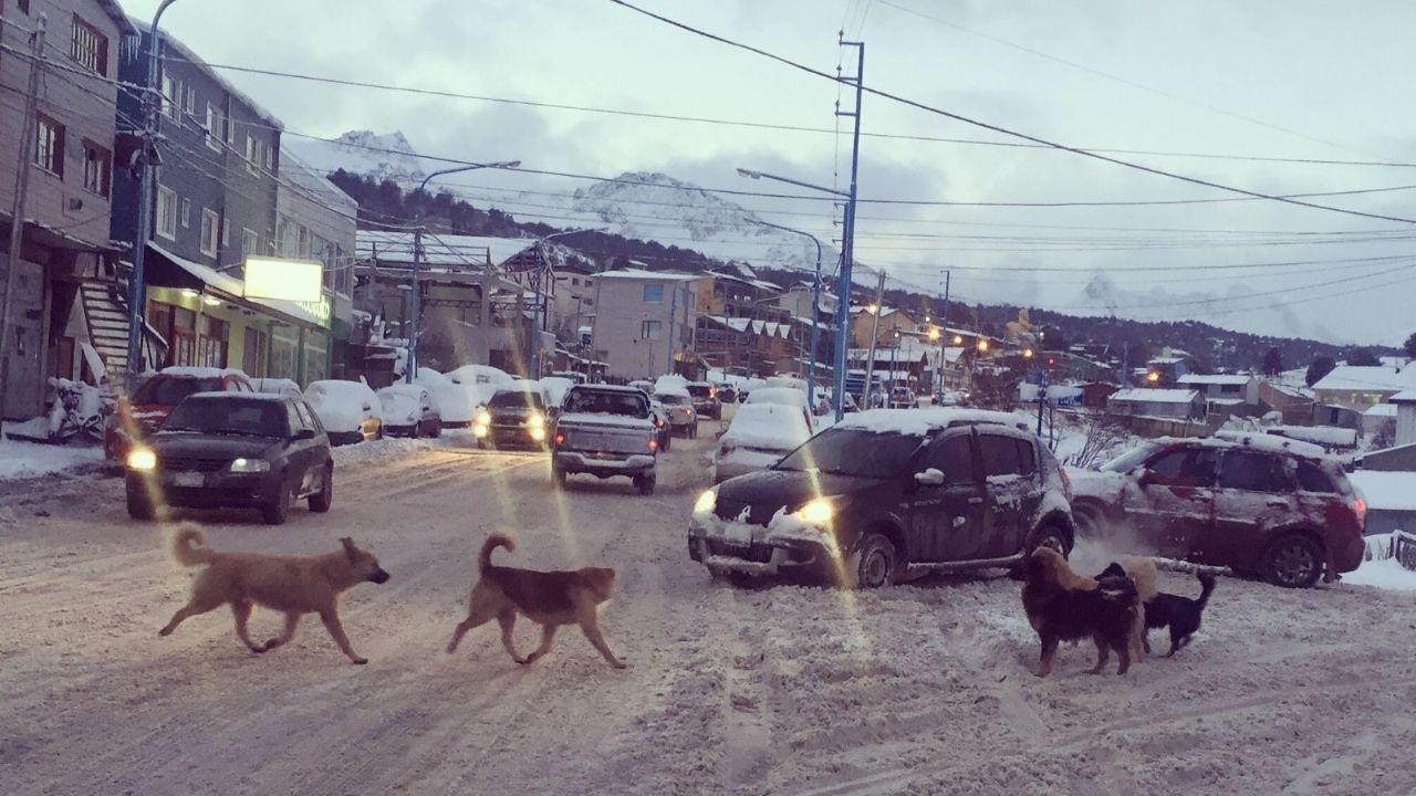 doce-mil-perros-sueltos-en-ushuaia:-evaluan-incrementar-las-multas-y-carcel