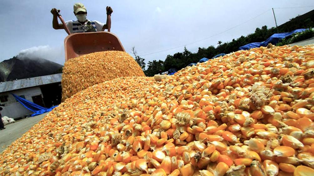 la-cosecha-de-granos-creceria-7,2%-hasta-las-129,8-millones-de-toneladas